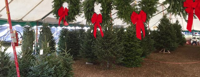 Fresh handmade wreaths and natural Christmas Trees of various sizes